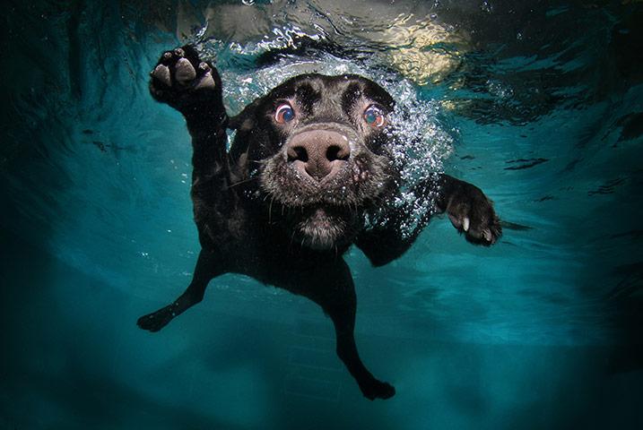 Perros pueden bucean durante media hora con tecnología Rusa